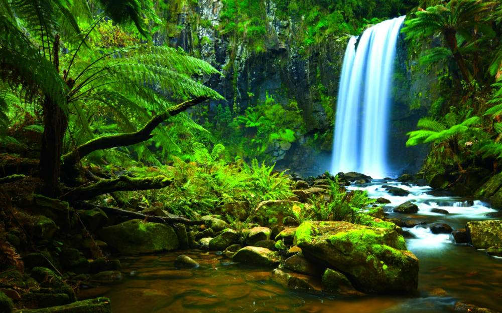 Amazon-Rainforest-Waterfalls.jpg