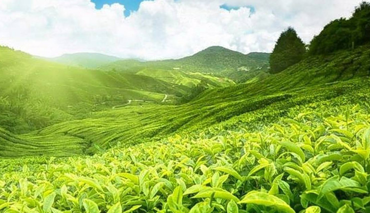 tea-garden-hill-of-munnar-1507882312-lb.jpg