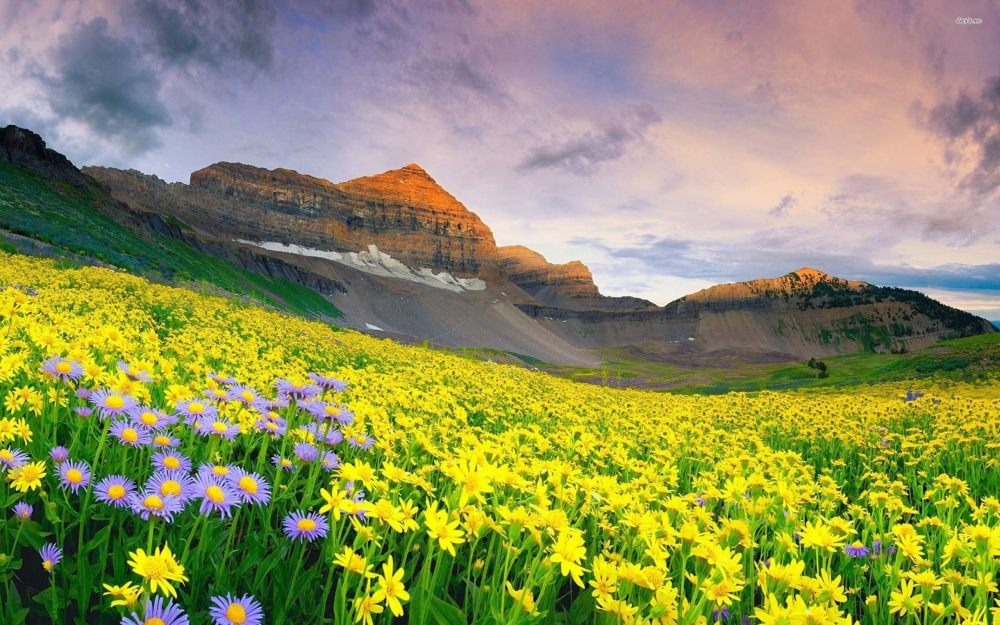 valley-of-flowers-UK.jpg